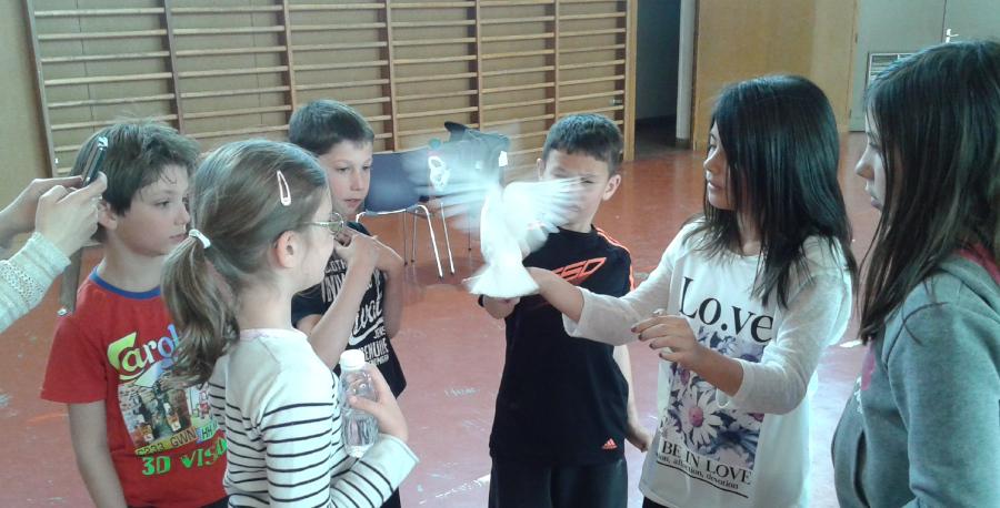 colombes avec les enfants